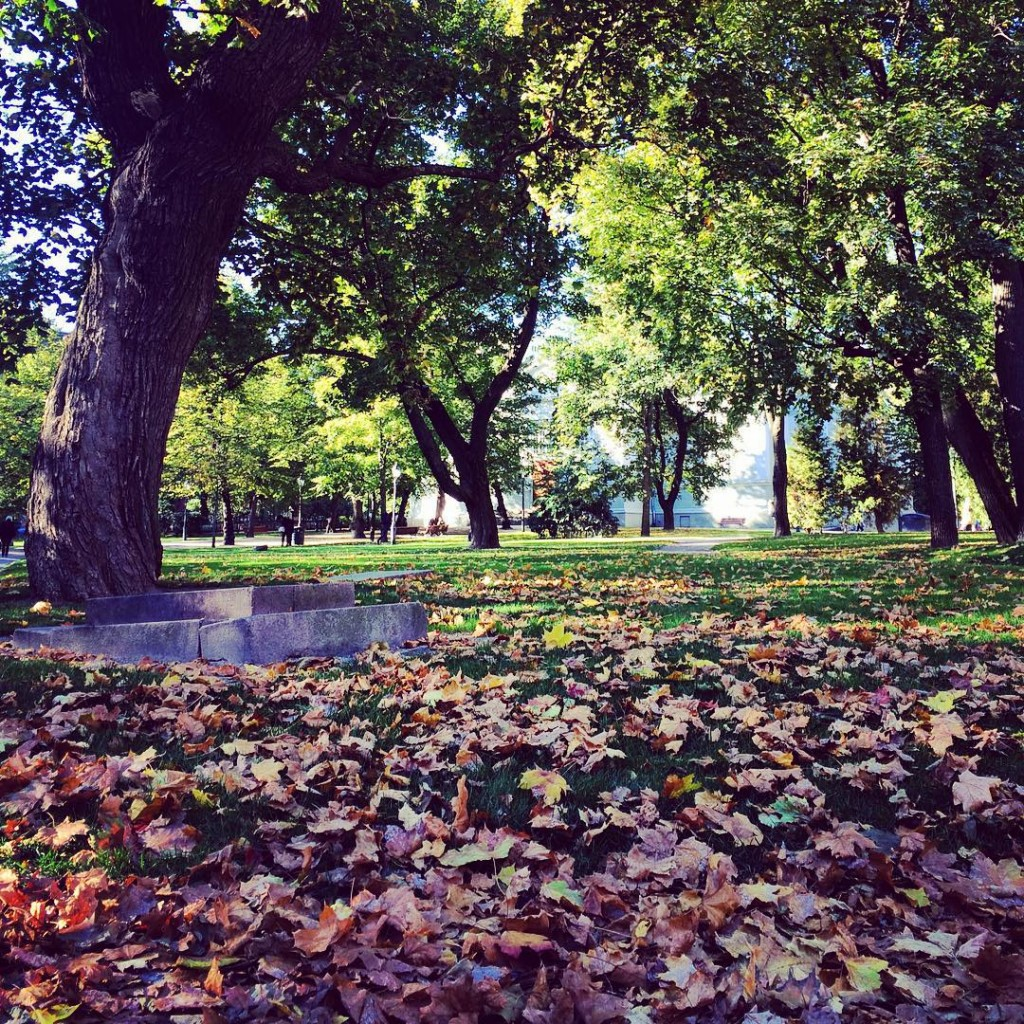 Gotta love the beauty that surrounds me! #helsinki @visithelsinki @helsinkiofficial #fall #autumn #citylife #citypark #trees #leaves #ruska #magical #nature #photographer #photooftheday #instadaily